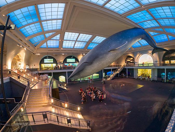 Americké muzeum přírodní historie v New Yorku